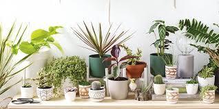 bathroom plants bunnings trendecors