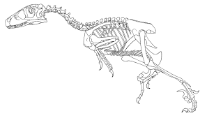 Dinosaur Skeleton Coloring Pages At Getdrawingscom Free For