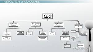 Business Organizational Chart Cool What Is An Organogram Definition Structure Example Video