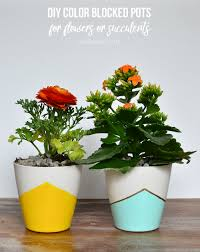 diy color blocked pots for flowers and succulents