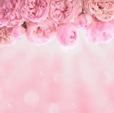 Pink Roses Border Wedding Background For Design