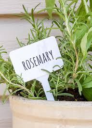 dollar tree rosemary herb marker dollar tree herb garden markers