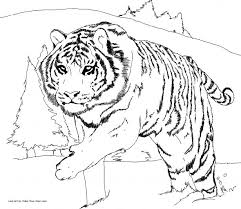 Small Picture Adult tiger coloring page Tiger Coloring Page Without Stripes