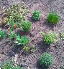 Kitchen Garden Herbs From A Kitchen Garden Gone Wild To Disciplined Herbs Det Gode