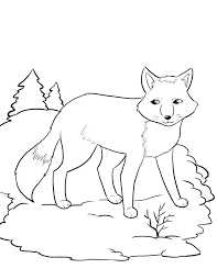 winter animals coloring pages winter animals to color winter animal coloring pages a cat looks beautiful winter animals coloring pages