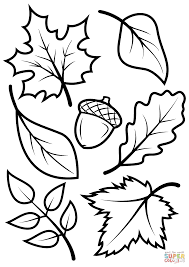 28 Coloring Page Of Leaves Fall Leaves And Acorn Coloring Page