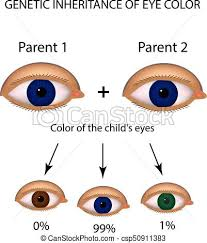 Parent Eye Chart 58 Prototypic Eye Color Chart From Parents