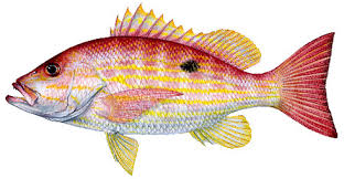 Common Finfish In Mississippi Waters Mississippi Saltwater