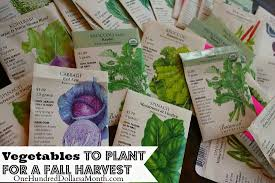 fall garden vegetables. planting a fall vegetable garden - time to start your seeds one hundred dollars month vegetables