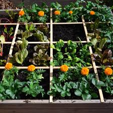 Square Foot Garden Plant Spacing Chart Square Foot Gardening Bonnie Plants