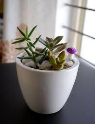 office pot plants. Succulent Pot, Plants, Seeds, Office, Home, House, Balcony, Window Office Pot Plants