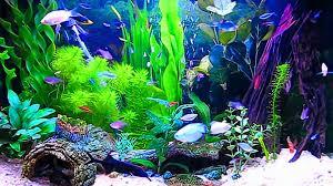 aquarium hd wallpaper