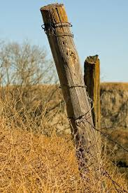 fence post. Download Old Fence Post Stock Image. Image Of Border, Golden, Environment - 1653997 N