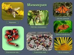 Урок лекция по теме Приспособленность организмов к среде обитания  Назад