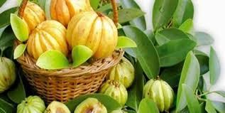 Image result for garcinia cambogia fruit