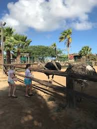 animal garden. TripAdvisor Gives A Certificate Of Excellence To Accommodations, Attractions And Restaurants That Consistently Earn Great Reviews From Travelers. Animal Garden