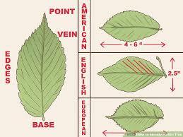45 Specific Pa Leaf Identification