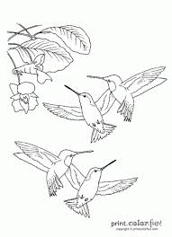 Small Picture Hummingbird Flower Coloring Coloring Coloring Pages