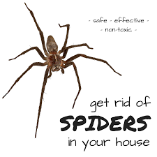 get rid of spiders in your house how to kill spiders house g86