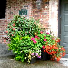 container garden plantings bring life and movement into your home they become an expression of your style and create an inviting atmosphere to both indoor