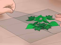 Designs Made From Leaves 3 Ways To Make A Leaf Collage Wikihow
