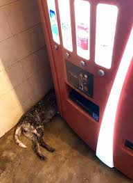 Dog Vending Machine New Man Finds Dog Behind Rest Stop Soda Machine And Decides To Save Her