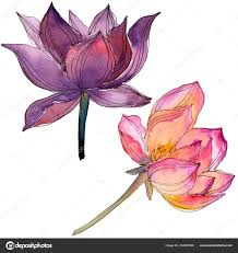 акварель красочные лотос цветок ботанический цветочные цветок
