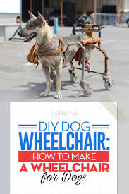 the diy dog wheelchair guide