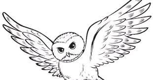 Blog Creation2 Owl Harry Potter Animal Coloring Pages
