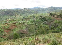 Landwirtschaft in Ruanda