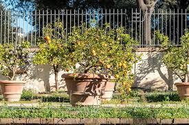great fruit trees for container