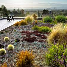 Small Picture 12 Great Drought Tolerant Plants Sunset