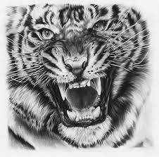 tiger drawing tattoo. Beautiful Tattoo Tiger Drawing By JoshuaBeatson On DeviantART Want This One My Finger As A  Tattoo Maybe When Iu0027m Nineteen  Inside Drawing Tattoo O