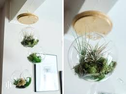 hanging air plant terrariums hanging terrarium with capitol romance on design co diy hanging air plant