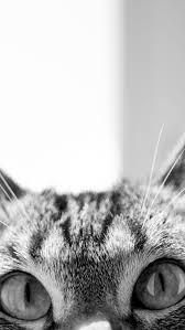 cat wallpaper iphone 5. Modren Cat Peeking Cat Intended Wallpaper Iphone 5