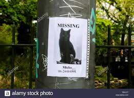 Lost Cat Flyer Lost Cat Flyer Stock Photos Lost Cat Flyer Stock Images