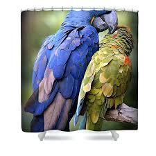 parrot shower curtain parrot shower curtains parrot shower curtain hooks