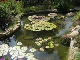 garden pond supplies. Pond Supplies Fish Food Filters Pumps Uv Sterilizers Plumbing Garden