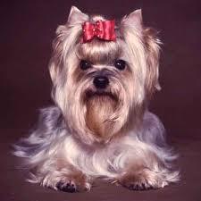 preventative other health 10 most por dog breeds and their health concerns