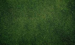 Grass Texture CnMuqi - HD Wallpapers