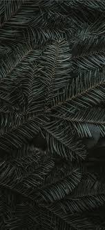 green pine tree leaves iPhone 11 ...