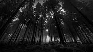 Dark Forest Dark 4k Nature Wallpaper