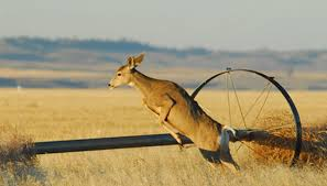 deer can leap over fences that are up to 8 feet tall