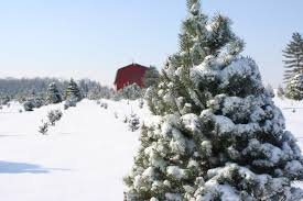 Places To Cut Down Christmas Trees
