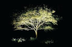 moonlight outdoor lighting. Moon Lighting Landscape Moonlight Tree . Outdoor