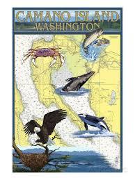 Camano Island Washington Nautical Chart Posters By