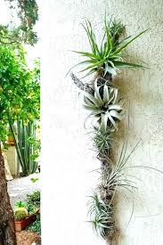 air plant wall mount art to get plants on your healthy mounted planters diy rack clay wall mounted plants