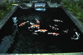 koi pond lighting ideas. fine pond view in gallery  for koi pond lighting ideas l