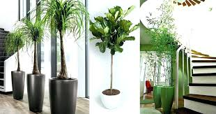 large low light indoor plants tall low light houseplants best large indoor plants tall houseplants for home and offices balcony garden web low light tall