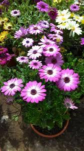 Bahar çiçekleri — Steemit